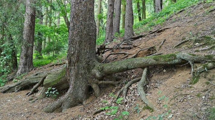 Les v okolí Mokřadu Troubského potoka